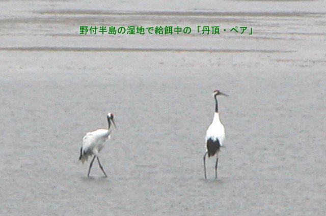 2004.09.30-A 野付半島 049.JPG