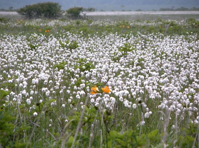 2006.07.04-07N- 002 浜中・霧多布湿原.JPG