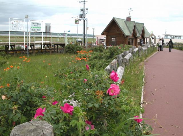 2006.07.06-16N- 031 小清水原生花園.JPG