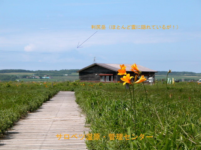 2006.07.07-22N- 019 サロベツ原生花園.JPG