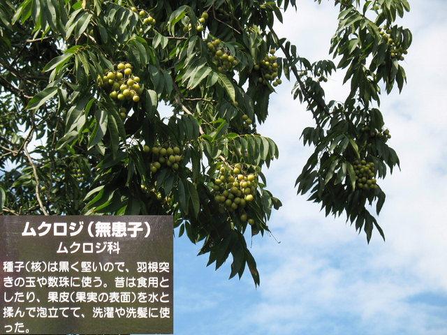 2012.10.07 A -  085 妻沼・聖天様.JPG