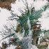 アラスカA 地球アート・樹氷.jpg