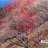 桜山公園(カタログより).jpg