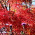 2012.11.20A -  002 鬼石・桜山公園.JPG