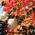 2012.11.20A -  015 鬼石・桜山公園.JPG