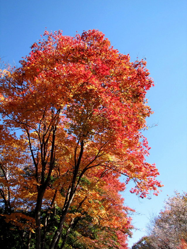 2012.11.20B -  001 城峯山公園.JPG