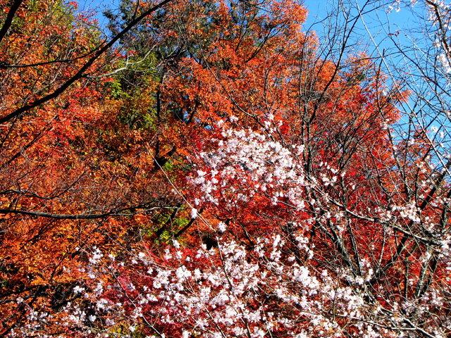 2012.11.20B -  009 城峯山公園.JPG