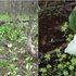 刺巻湿原 (2006.05.08) 1.jpg