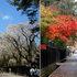 角館 春 VS 秋  (武家屋敷)A2   (1280×464).jpg