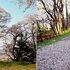 角館C 春 A1 (古城山)(1280×464).jpg