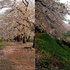 角館C(檜ノ木内川)B2 (1280×464).jpg