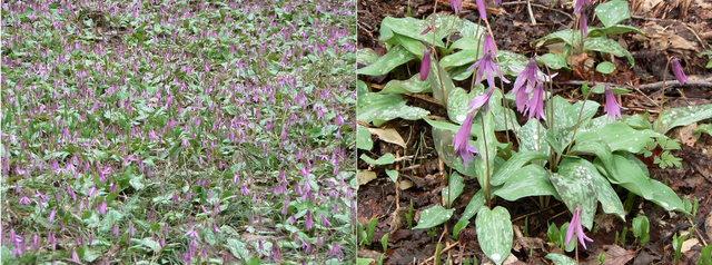 刺巻湿原 (2006.05.08) 3.jpg