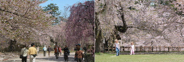 2006.05.09  弘前城 (公園) A2.jpg