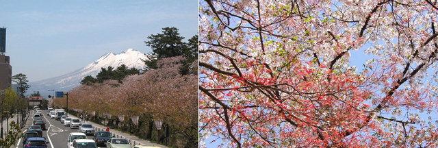 2006.05.09  弘前城 (公園) A3.jpg