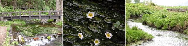 姫川源流 -04  ( 2005.05.18 ).JPG