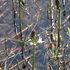 親海原湿原 -02 ( 2004.04.28 ).JPG