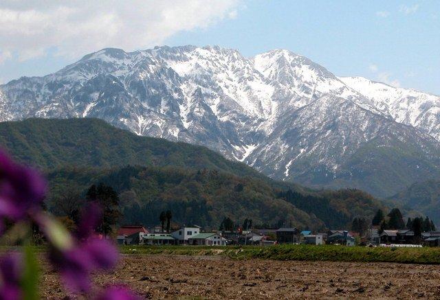 八海山 -002A 春・田起しの季節 .jpg