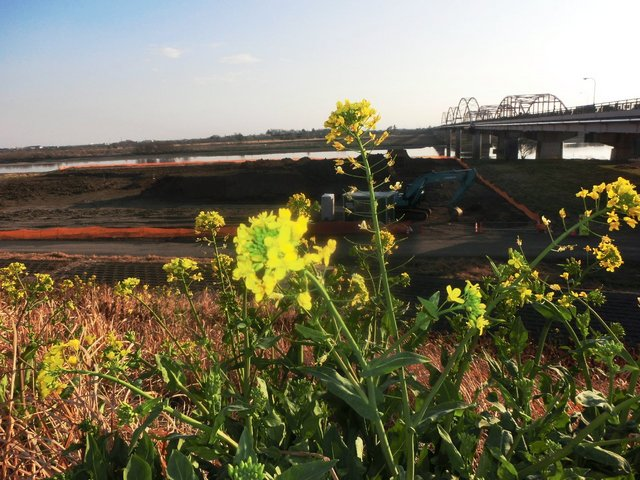 2014.03.18 A 002 (利根川・刀水橋、太田市側たもとにて).jpg