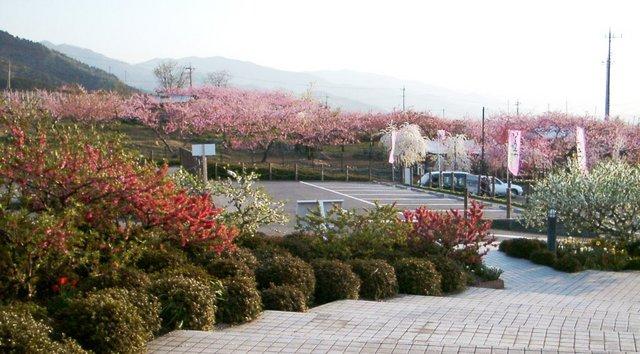 釈迦堂SA 1 .JPG