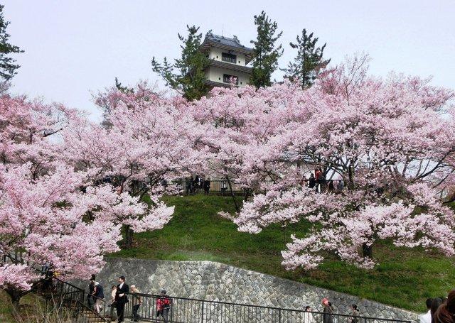 2014.04.13 A- 009 (高遠城址公園).jpg