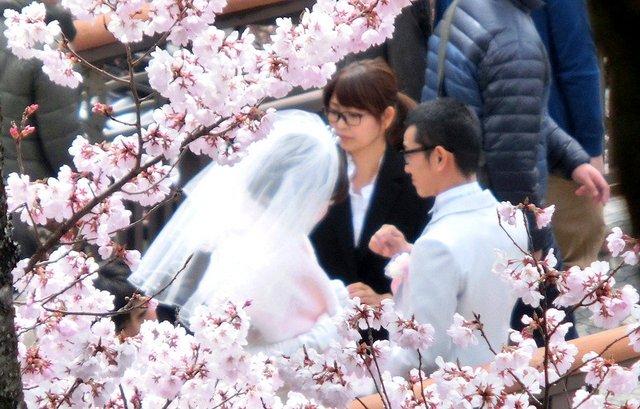 2014.04.13 A- 012 (高遠城址公園).jpg