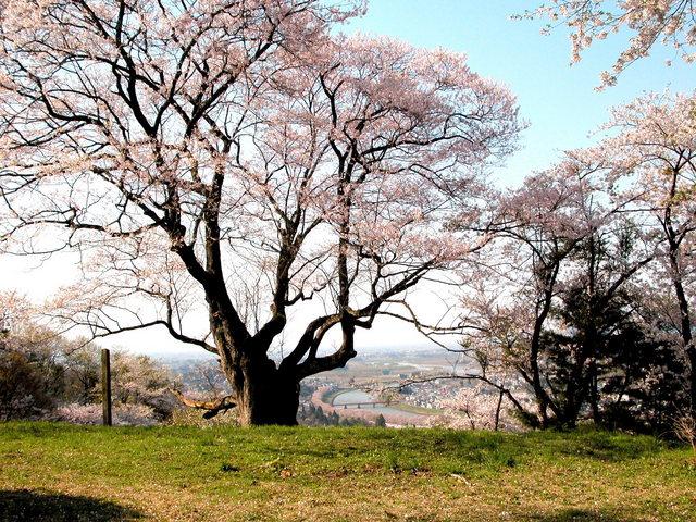 角館・古城山山頂 1 .jpg