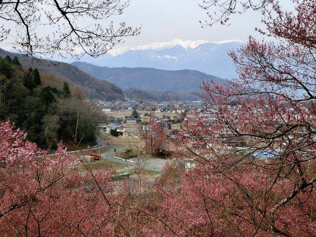 2014.04.13 A- 020 (高遠城址公園).jpg