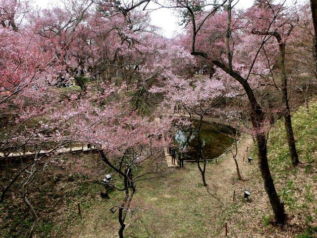 2014.04.13 A- 023 (高遠城址公園).jpg