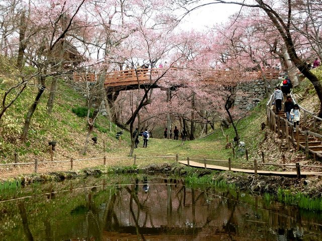 2014.04.13 A- 035 (高遠城址公園).jpg