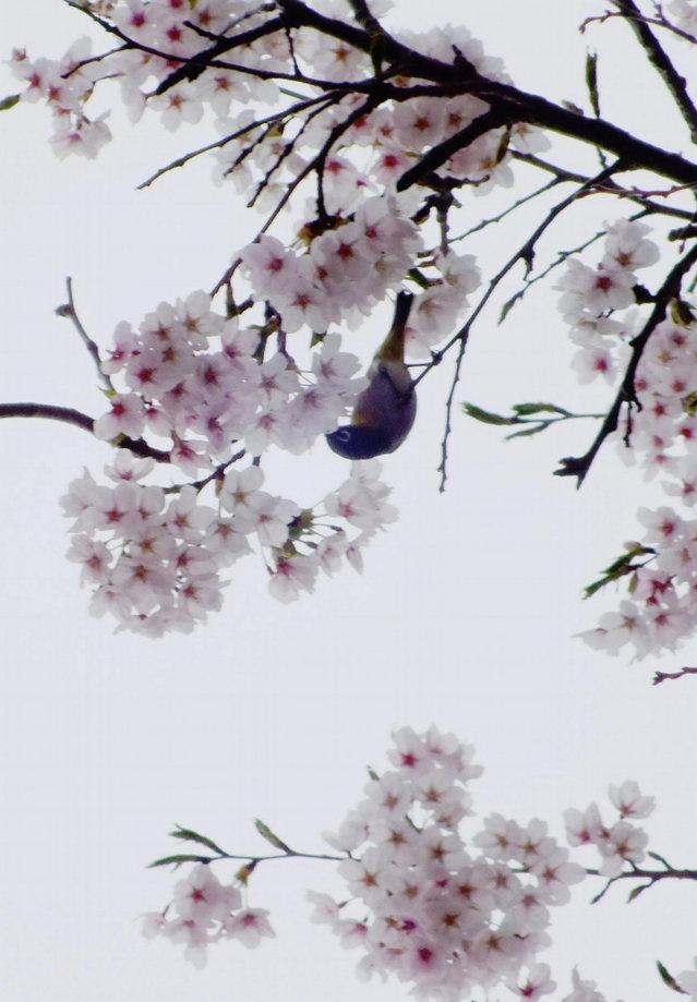 2014.04.29 A- 027 光城山 (9.25 to 10.10).jpg