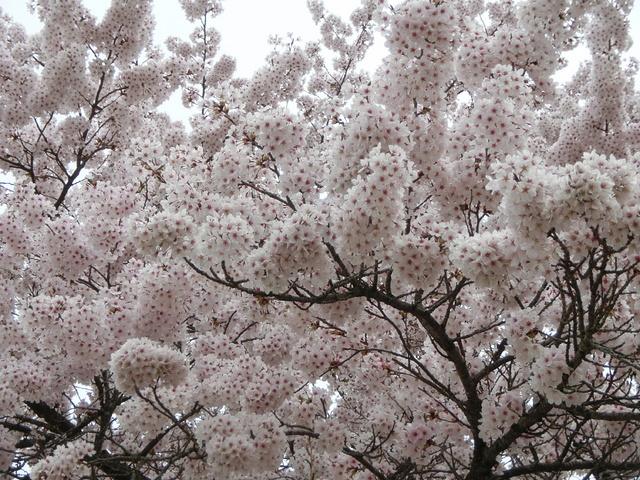 2014.04.29 B- 044 長峰山 (10.08 to 10.31).jpg