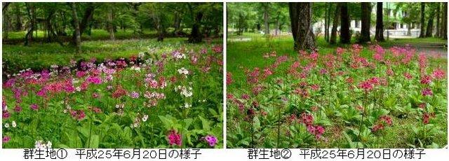 千手ケ浜 2B.jpg