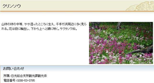 クリンソウ 日光市HPより抜粋.JPG