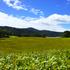 14.09.07-017 尾瀬 U ヤナギランの丘.jpg