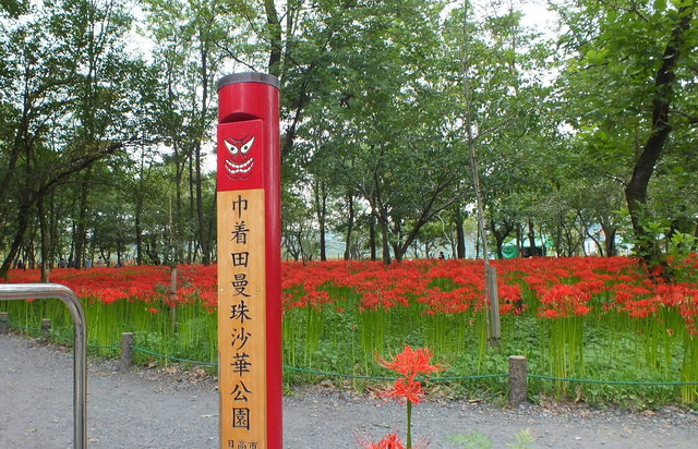 2014.09.20_140 曼珠沙華・巾着田A.jpg