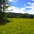 14.09.07-026 尾瀬 U 尾瀬ヶ原・ヤナギランの丘分岐点付近.jpg