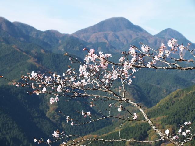 14.11.16 B - 015 鬼石「桜山公園」.jpg