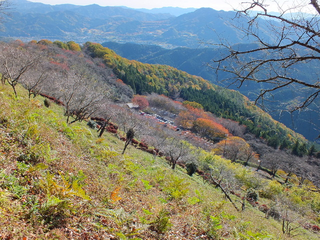 14.11.16 B - 034 鬼石「桜山公園」.jpg