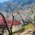 14.11.16 B - 037 鬼石「桜山公園」.jpg