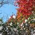 14.11.16 B - 064 鬼石「桜山公園」.jpg