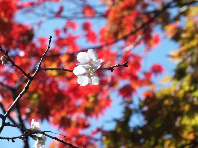 14.11.16 B - 069 鬼石「桜山公園」.jpg