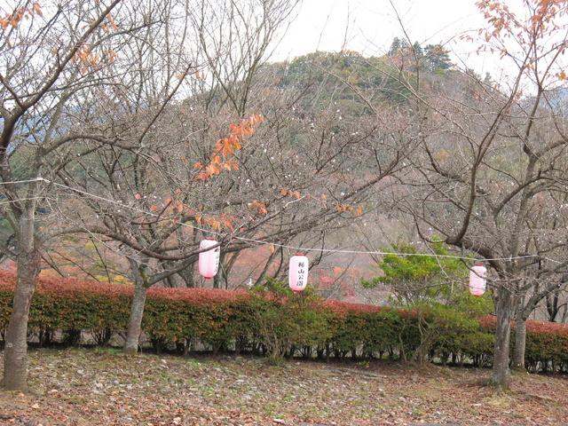 2014.11.06 B001 鬼石「桜山公園」.jpg