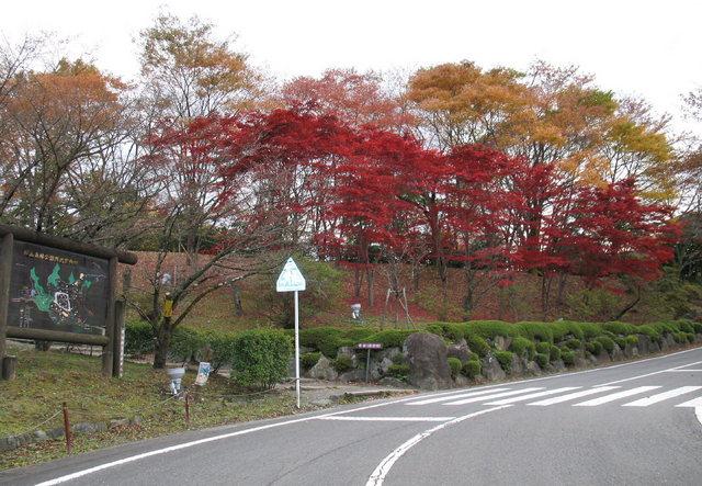 2014.11.06 B003 鬼石「桜山公園」.jpg