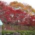 2014.11.06 B004 鬼石「桜山公園」.jpg