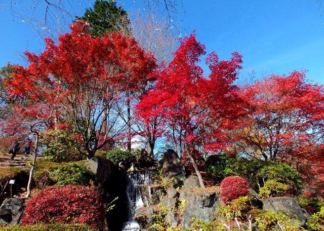 14.11.16 B - 084 鬼石「桜山公園」.jpg