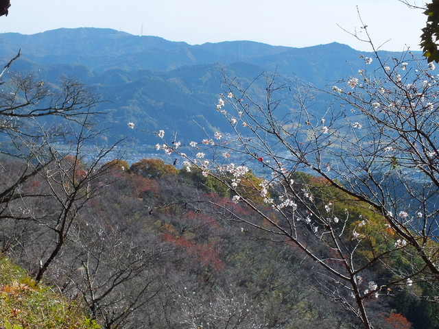 14.11.16 B - 033 鬼石「桜山公園」.jpg