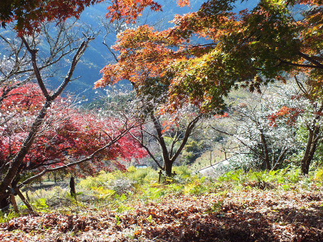 14.11.16 B - 036 鬼石「桜山公園」.jpg