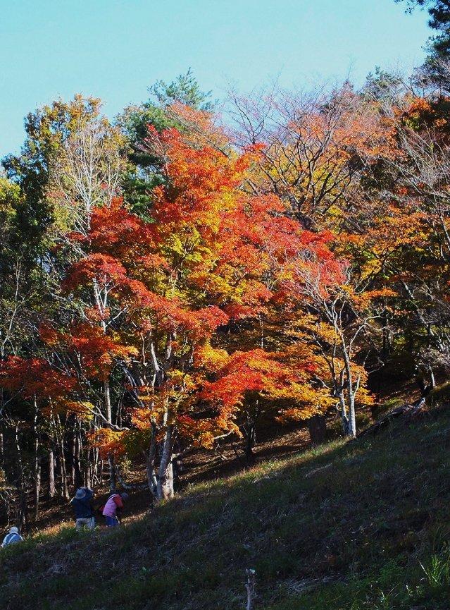 14.11.16 B - 031 鬼石「桜山公園」.jpg