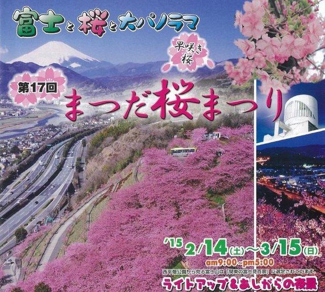 桜まつり(松田山ハーブガーデン).JPG