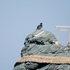 2015.03.28C 19 (13:10から14:10 頃)夫婦岩.jpg
